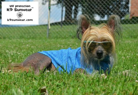 K9,Sunwear™,Cool,Touch,SunBlock,Dog,Vest,with,UV,protection,cooling dog shirt, sun dog shirt, italian greyhound sun protection, IG clothes, italian greyhound clothing