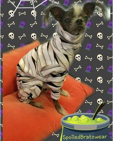 Glow,Mummy,Cotton,Knit,Romper/Costume,with,GLOWING,accents,italian greyhound halloween, dog halloween, dog costume, chinese crested, dachshund halloween