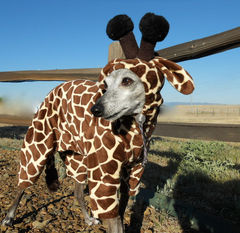 Giraffe Pet Costume-Italian greyhound costume - product images 2 of 6
