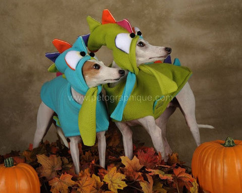 The,Colorful,Dragon,Skittlesaurus,fleece,lined,dog,coat,with,glowing,hat,,custom,made,dog_costume,colorful,lined_dog_coat,original,glow_in_the_dark,ear_warmer_for_dogs,dragon,spoiled_bratzwear,pet_costume,best_costume,year_of_the_dragon,italian_greyhound,chinese_new_year,glow paint,imagination