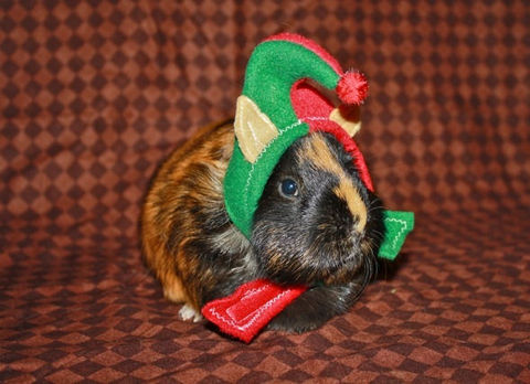 Tiny,Elf,Hat,for,Guinea,Pigs,,Rats,and,Ferrets,XXSmall,Pets,Clothing,ferret_hat,elf_hat,guinea_pig_hat,rat_hat,christmas,holidays,elfkin,fleece,imagination