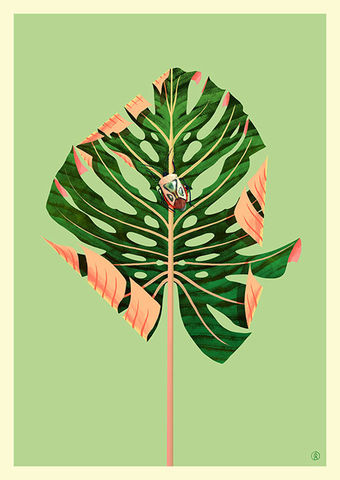 The,Cheese,Plant,Guy Mckinley, Giclée Print, Art Print,  Guy Mckinley Print, Colour, Botanicals, Leaves, Flora, Fauna, Cheeseplant, Poster,