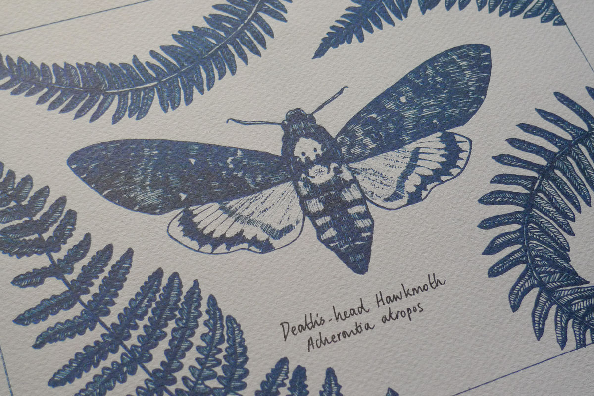 Death's Head Hawkmoth print - product image