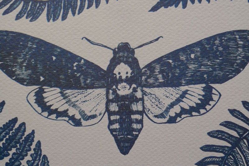 Death's Head Hawkmoth print - product images  of