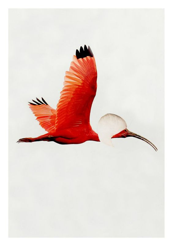 Bob by Sophie Titherington (part of the Bird Cuts series) - product images