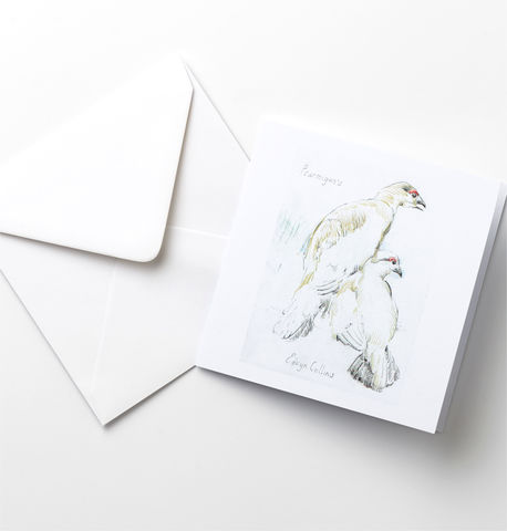 Ptarmigan,Cards,Pack,Ptarmigans, Edwyn Collins BIrd Drawings, Bird Cards