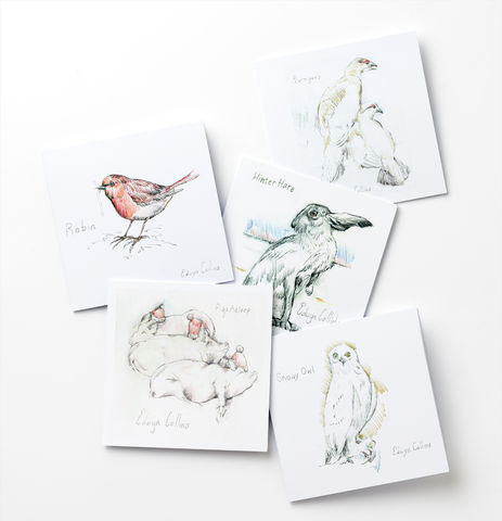 AED,Cards,Selection,Pack,Edwyn Collins Drawings, Wildlife Cards