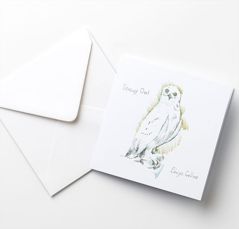 The,Snowy,Owl,and,Robin,Cards,Mixed,Pack,Robin Cards, Snowy Owl  Cards, Edwyn Collins bird illustrations