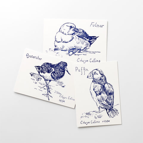 British,Seabird,Postcards,(pack,of,six),Edwyn Collins, artworks, British Seabirds, postcards