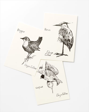British,Bird,Postcards,Edwyn Collins, artworks, British Birds, postcards