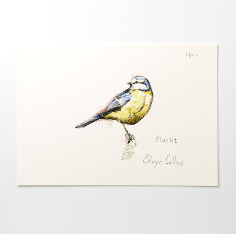 Blue,Tit,A3,Giclée,by,Edwyn,Collins,Edwyn Collins print, Edwyn Collins bird drawing, Blue Tit print