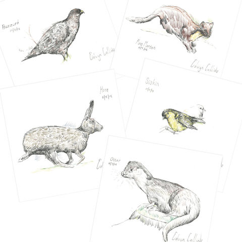 Wildlife,of,Helmsdale,Cards,Edwyn Collins Drawings, Wildlife of Helmsdale Cards
