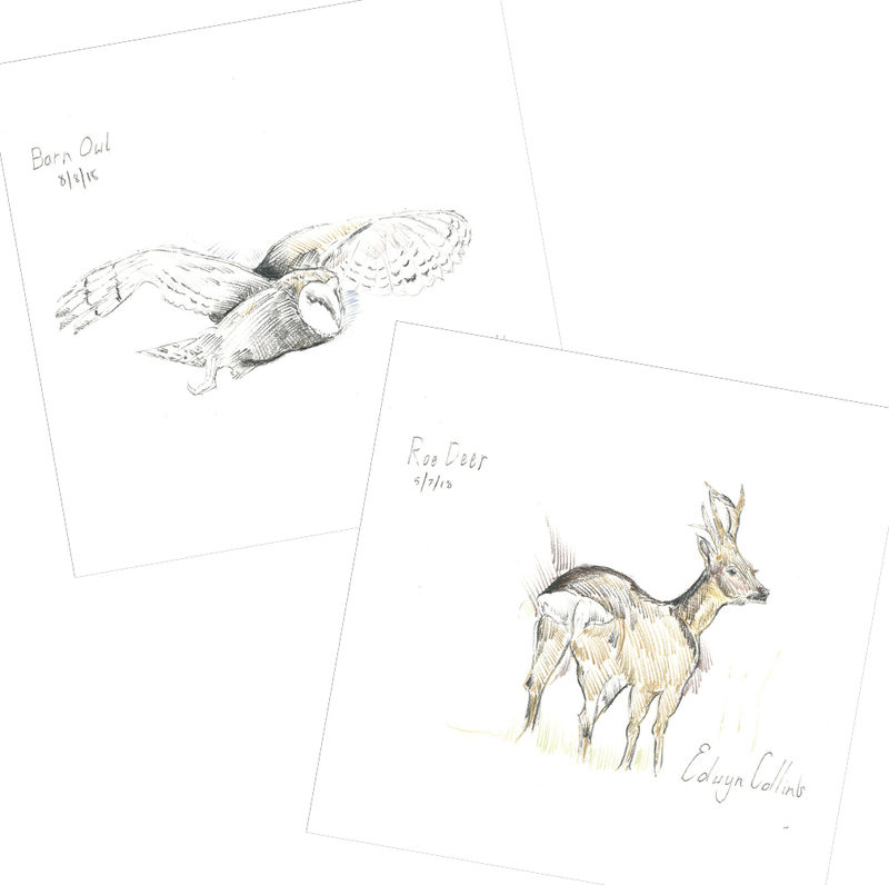 Wildlife of Helmsdale Xmas Cards (pack of ten) - product image
