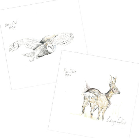 Wildlife,of,Helmsdale,Xmas,Cards,(pack,ten),Edwyn Collins Drawings, Wildlife of Helmsdale Xmas Cards