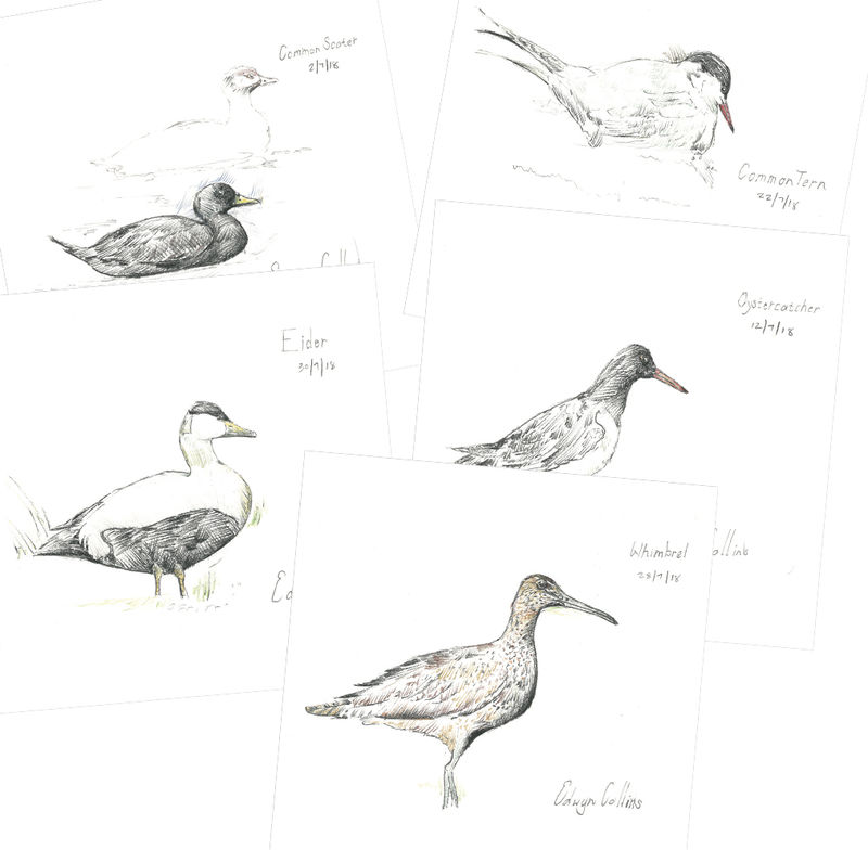 Seabirds of Helmsdale Cards (pack of ten) - product image