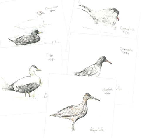 Seabirds,of,Helmsdale,Cards,Edwyn Collins Drawings, Seabirds of Helmsdale Cards