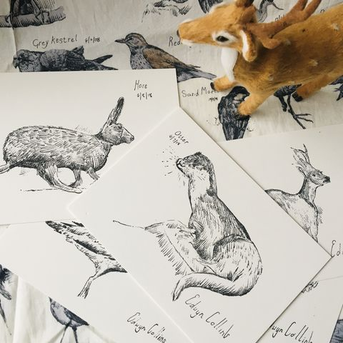 Wildlife,of,Helmsdale,Letterpress,Postcards,Edwyn Collins, art,  Wildlife of Helmsdale