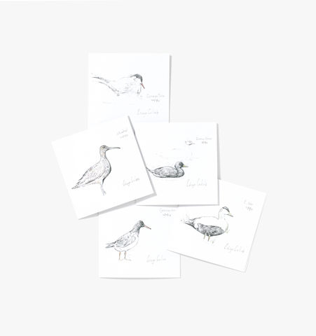 Seabirds,of,Helmsdale,Cards,(pack,ten),Edwyn Collins Drawings, Seabirds of Helmsdale Cards