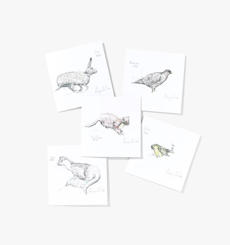 Wildlife of Helmsdale Cards (pack of ten) - product image
