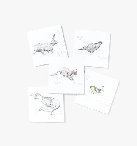 Wildlife,of,Helmsdale,Cards,(pack,ten),Edwyn Collins Drawings, Wildlife of Helmsdale Cards
