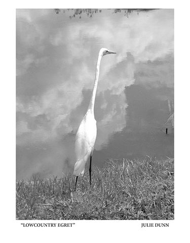 Lowcountry,Egret,Black and White Photograph; Charleston; B&W photos; egret; bird; water