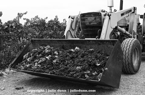 Under,Construction,wine; grapes; califorina wines; sonoma; napa;photography;black and white photos