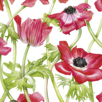 Red,Anemones,Birthday,Card,buy flower birthday cards online, buy birthday cards with flowers online, buy floral birthday cards, buy female birthday cards online, flower birthday cards for her, anemone birthday card, poppy birthday card, red flowers birthday cards