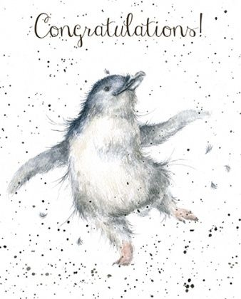 Penguin,Congratulations,Card,buy congratulations cards online, buy well done cards online, buy congrats cards online, congratulations cards with penguin, penguin cards, cards with penguins