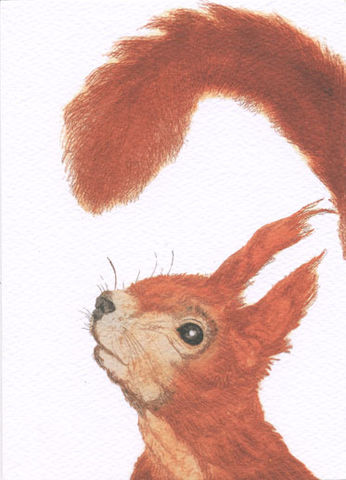Red,Squirrel,Greetings,Card,-,Perfect,Autumnal,buy beautiful animal cards online, buy animal birthday cards online, buy autumnal greetings cards online with trees, buy red squirrel cards online for autumn, buy squirrel cards online, buy red squirrel cards online, buy cards with trees and nature online
