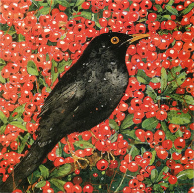 Blackbird,&,Berries,Greetings,Card,-,Perfect,Autumnal,buy autumnal greetings cards online with trees, buy cards with birds online, buy blackbird and berries cards online, buy nature garden cards online, buy garden bird cards online, buy cards with blackbirds and plant online