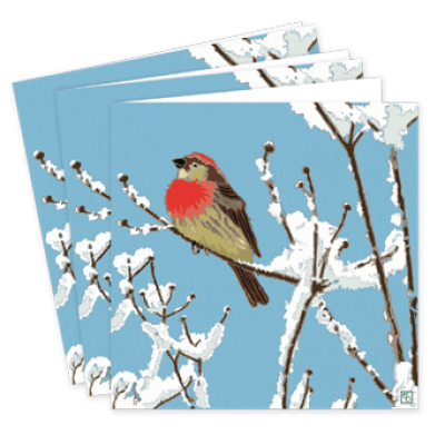 Pack,Of,Little,Winter,Bird,Christmas,Cards,-,Emily,Burningham,buy emily burningham christmas cards online, buy luxury christmas cards online with birds, robin little winter bird beautiful packs of christmas cards, christmas cards for friends, family and colleauges, made in england christmas cards