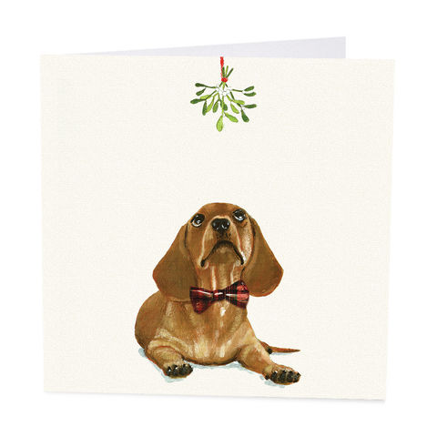 Pack,Of,Dachshund,Under,The,Mistletoe,Christmas,Cards,-,Shelter,Charity,buy shelter charity christmas cards online, buy luxury christmas cards online with dogs, buy sausage dog christmas cards online, buy pack of christmas cards with dachshund dog online, buy animal and dog christmas cards online, buy mistletoe christmas card