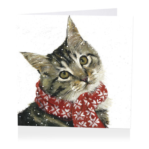 Pack,Of,Cat,Wearing,Scarf,Christmas,Cards,-,Shelter,Charity,buy shelter charity christmas cards online, buy luxury christmas cards online with cats, buy tabby cat christmas cards online, buy pack of christmas cards with cat scarf snow online, buy animal and cat christmas cards online,