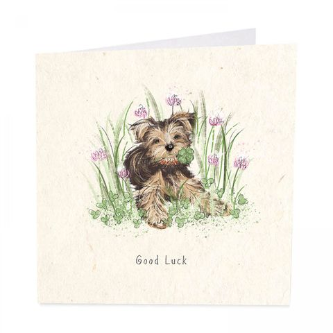 Dog,&,Clover,Good,Luck,Card,buy dog good luck card online, buy pretty yorkshire terrier dog cards online, buy dog and four leafed clover good luck card for him her unisex, lucky cards, good luck cards with dog pet flowers,