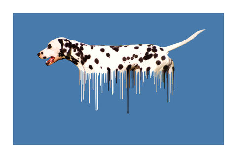 Dalmatian,Blue,Art, Print, Animals, Dalmatian, blue, dog, drips, urban, splash, flight, paint, painterly, affordable art, limited edition, art, print, art prints, signed edition