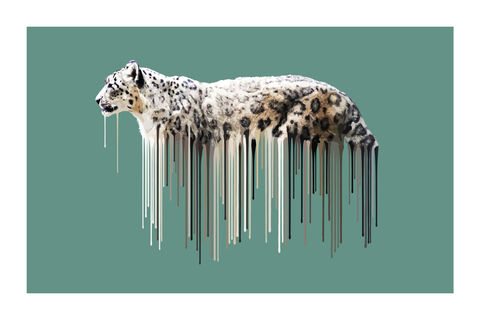 Snow,Leopard,-,Sage,Art, Print, Animals, Snow Leopard, Sage, cute, drips, urban, splash, flight, paint, painterly, affordable art, limited edition, art, print, art prints, carl moore, signed edition