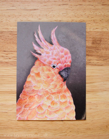 Pink,Cockatoo,Postcard,Print,Art,Illustration,illustrated_cards,cards,illustration,uk,stationery,postcard,illustrated_postcard,postcard_print,birds,cockatoo,pink_cockatoo,bird_card,bird_print,card,350gsm_paper_stock