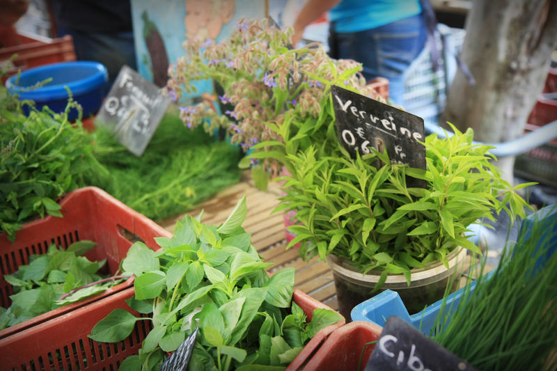 Herbs in French Cooking - product image