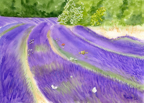 Lavender,Field,Giclee print, Lavender field, Roussillon, lavender and green, watercolor, Provencal decor