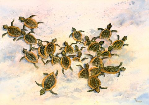 Turtles,to,the,Sea,baby,sea,turtles,scramble,ocean,Art,     Print,     Giclee,     Baby sea turtles,     watercolor print,     green and sandy,     Ocean,     beach art decor,     turtle print,     maryellengolden,     tiny turtles,     sand,     seascape