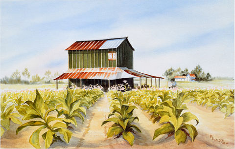Carolina,Summer,tobacco field, farmhouse, tobacco growing, tobacco barn, tobacco farm, green tobacco, tobacco leaves