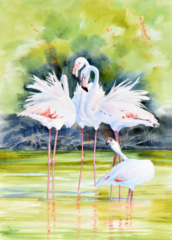 Flamingo,Dance,in,the,Camargue,Giclee, Flamingo, marsh, Camargue, Provence, France, watercolor, flamingo dance,