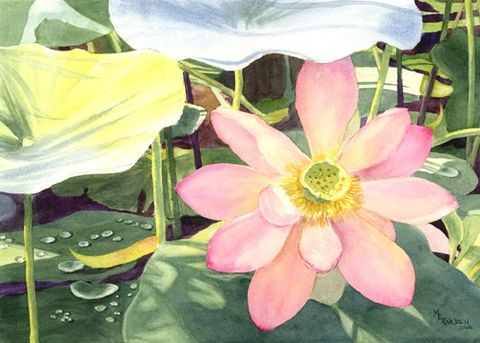 Lotus,Art,Print,Giclee,painting,watercolor,pink,green,lotus,blossom,ink,watercolor paper