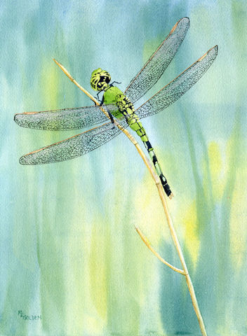 Green,Dragonfly,giclee,print,from,a,watercolor,Art,Print,Giclee,dragonfly,green,painting,dragonfly_painting,dragonflies,nature,wings,golden,online_art_gallery,inks