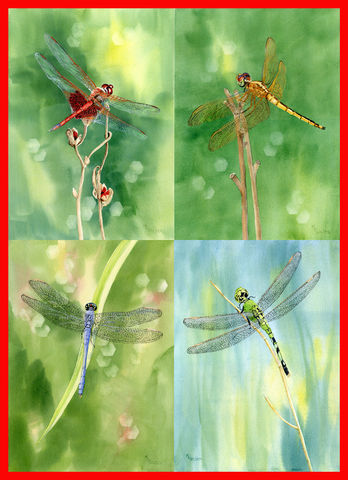 Dragonfly,Collection,from,original,watercolors,Art,Print,Giclee,Dragonflies,Blue_dragonfly,green_dragonfly,red_dragonfly,golden_wing_skimmer,green,dragonfly,wings,Mary_Ellen_Golden,watercolor,giclee_print,nature,inks,watercolor paper
