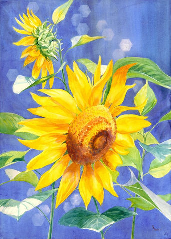 Sunflower,giclee,art,print,Art,Print,Giclee,sunflower,blue,yellow,floral_watercolor flower