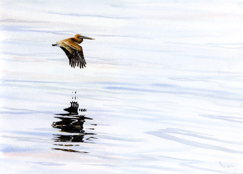 Pelican,Reflections,from,the,ferry,in,Pamlico,Sound,Art Print,Giclee,pelican,flight,reflections,water,calm,tranquil,brown,blue,watercolor,giclee,beach_painting,inks,paper