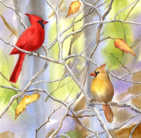 Cardinals,Art,Print,Giclee,painting,watercolor,landscape,cardinals,birds,red_bird,branches,arches hotpress watercolor paper,inks