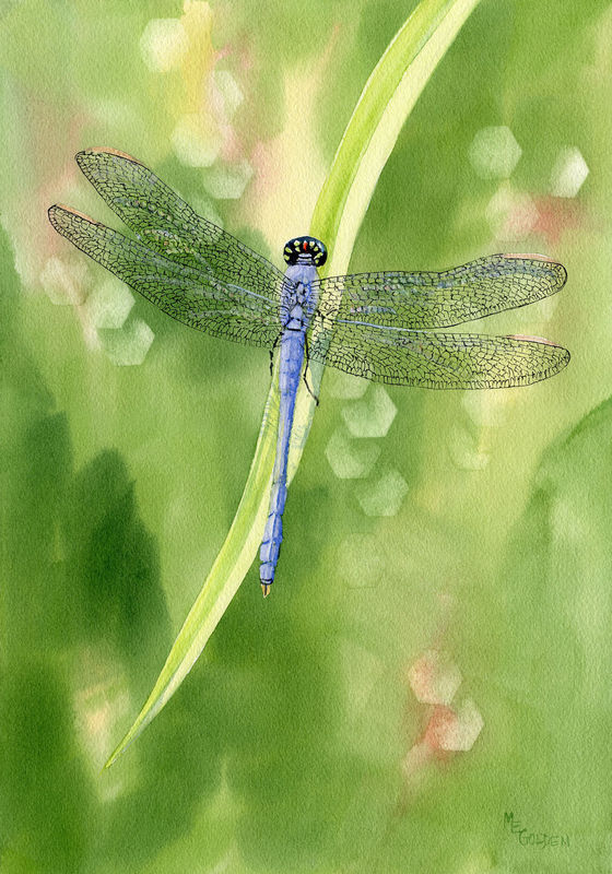 Blue Dragonfly giclee print - product images