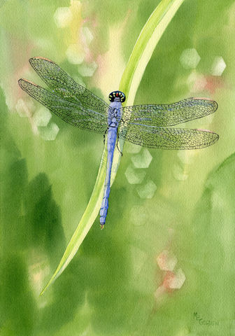 Blue,Dragonfly,giclee,print,Art,Print,Giclee,blue_dragonfly,green,daylily_leaf,watercolor_dragonfly,Golden,online_art_gallery,blue,dragonfly_watercolor,giclee_dragonfly,inks,watercolor paper